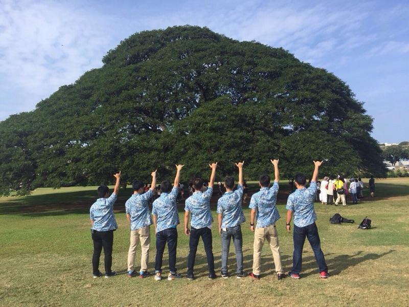 日本で有名なこの木、ハワイでは??