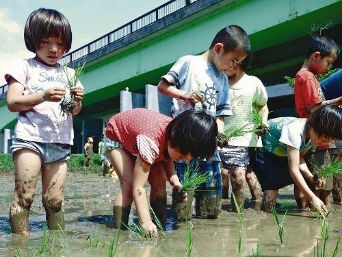 沖縄県名護市で開催された田植え体験