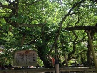 太宰府天満宮は「学問・至誠しせい・厄除けの神様」として、年間に約700万人の参拝者が 訪れているそうです。