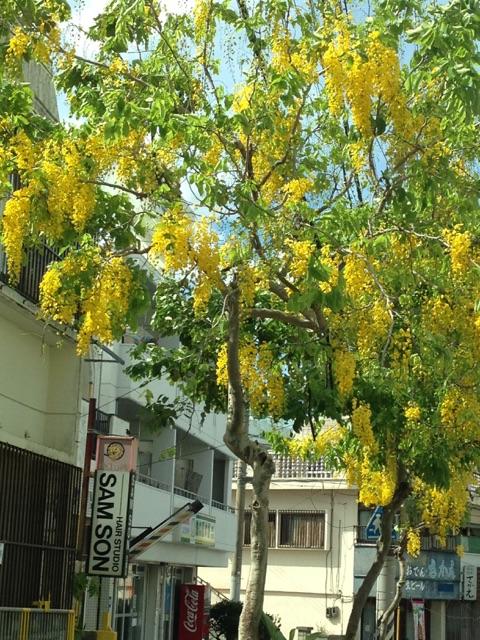 黄色い房状の花