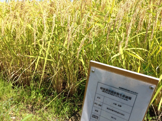 富山県コシヒカリ、特別栽培という栽培方法で作られたお米です