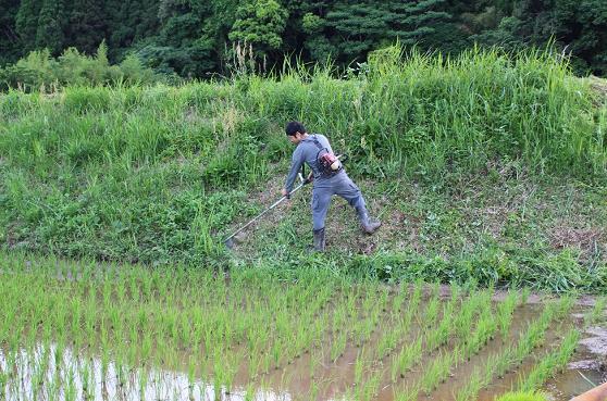日本の米農家と世界情勢