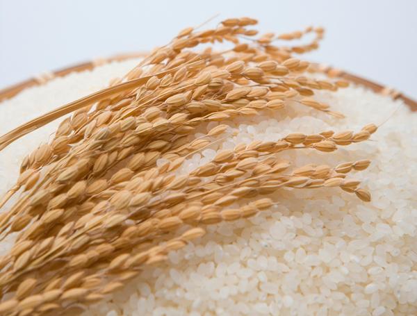 TPPと日本のお米