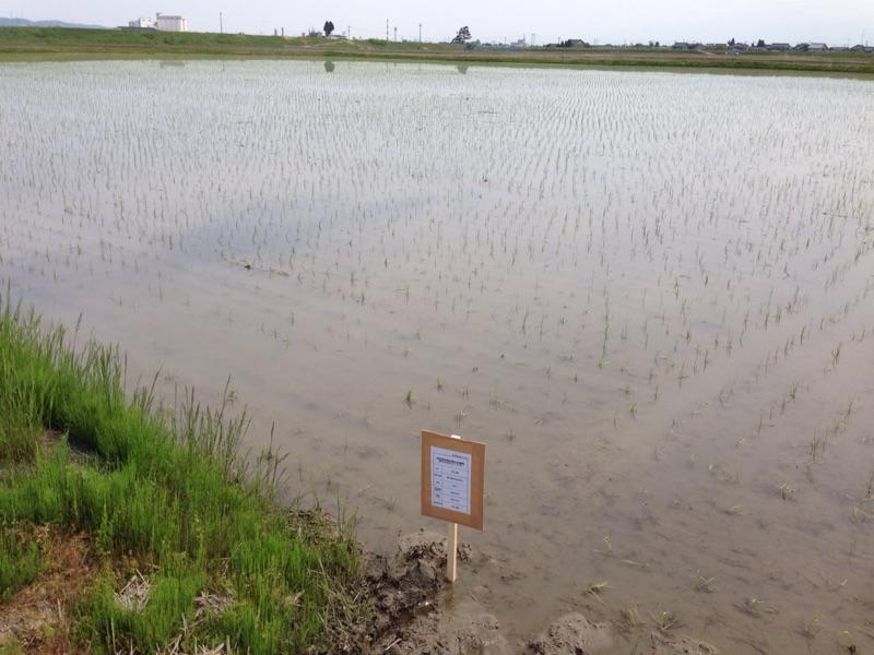 特別栽培のお米を作る農家さん