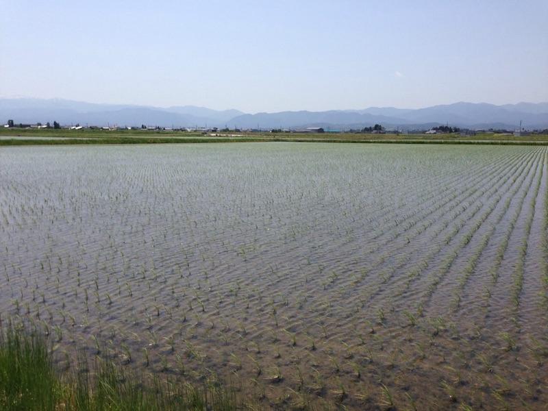 富山県の田園風景