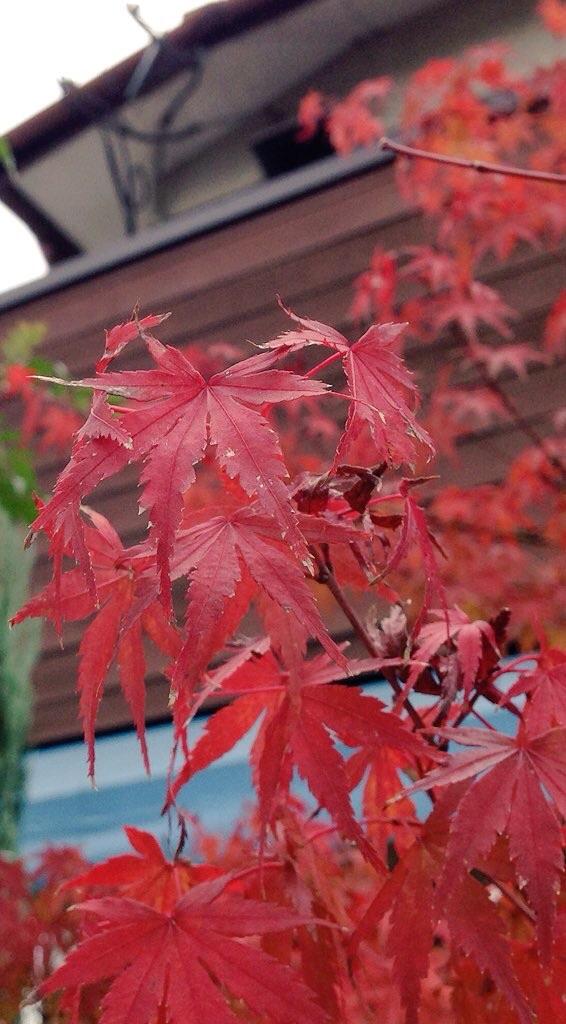 九州の紅葉