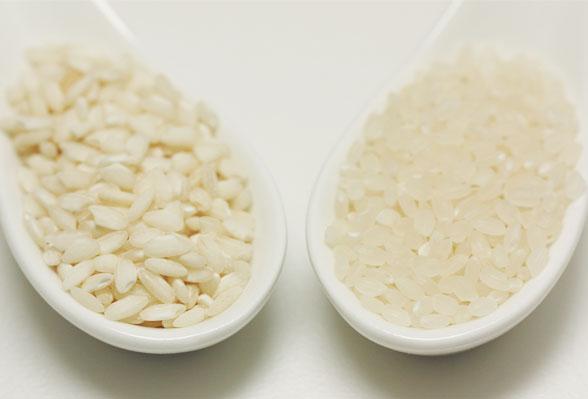 イタリアのお米と日本のお米の違い