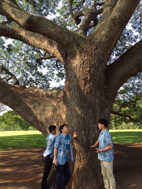 日本人観光客は必ず訪れ宇る、ハワイに木の下で