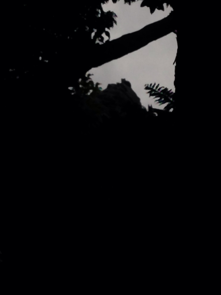 大石林山のあるポイントでしか見ることのできない岩の形とは