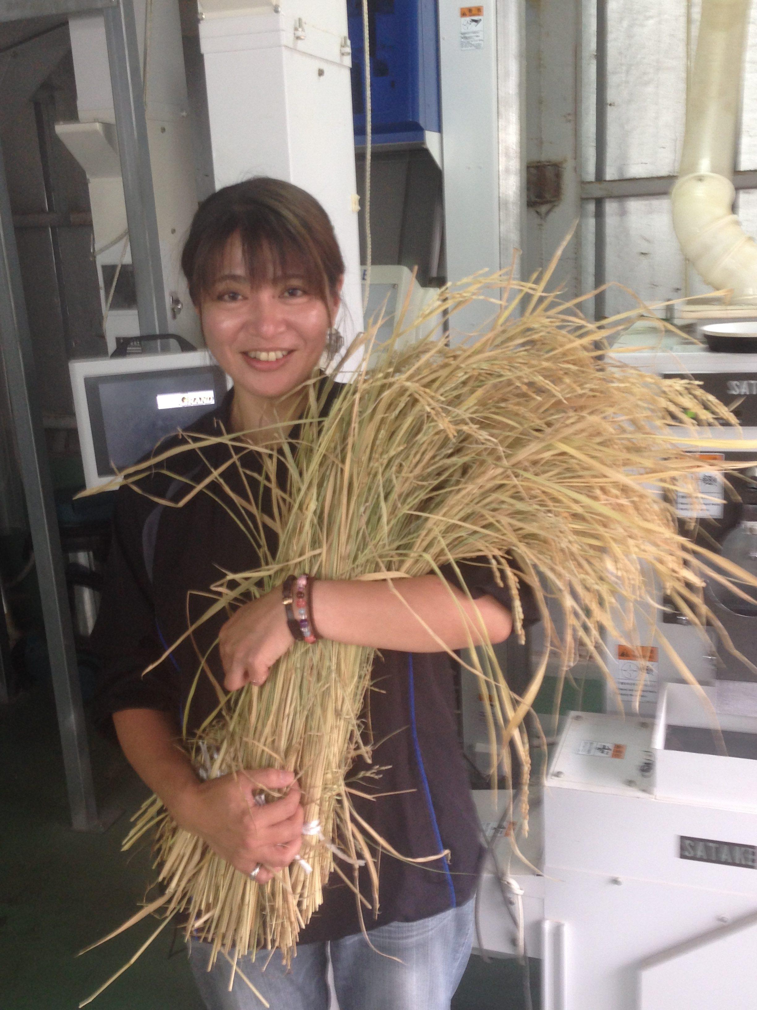 鹿児島県の米農家さんから稲穂が届きました。抱えるくらいあるのが新鮮です!