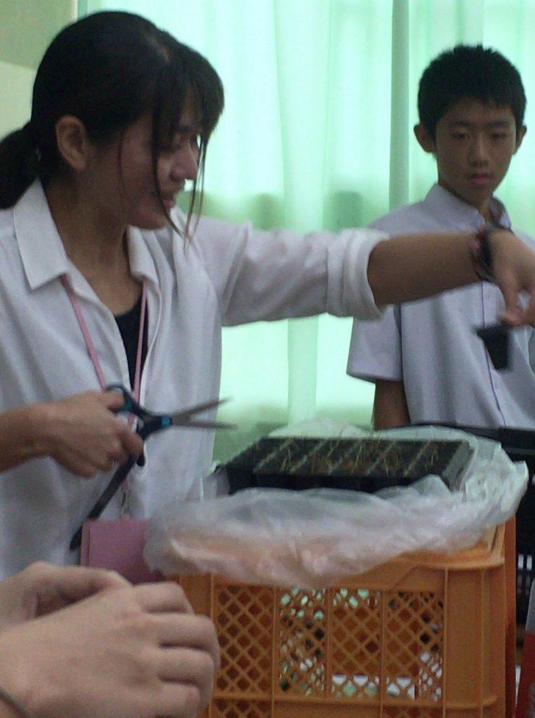 お米講座で稲の赤ちゃんをプレゼント!