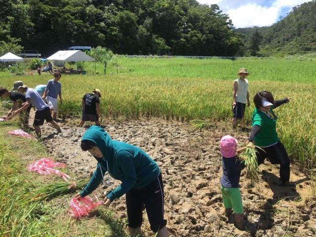 沖縄の名護市で開催された稲作イベントは若者が中心で盛り上がっていた