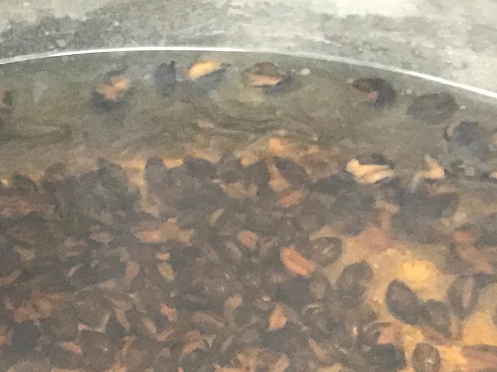 麦茶を煮出すと、麦が沈んでいきます。その様子を画像付きでご紹介