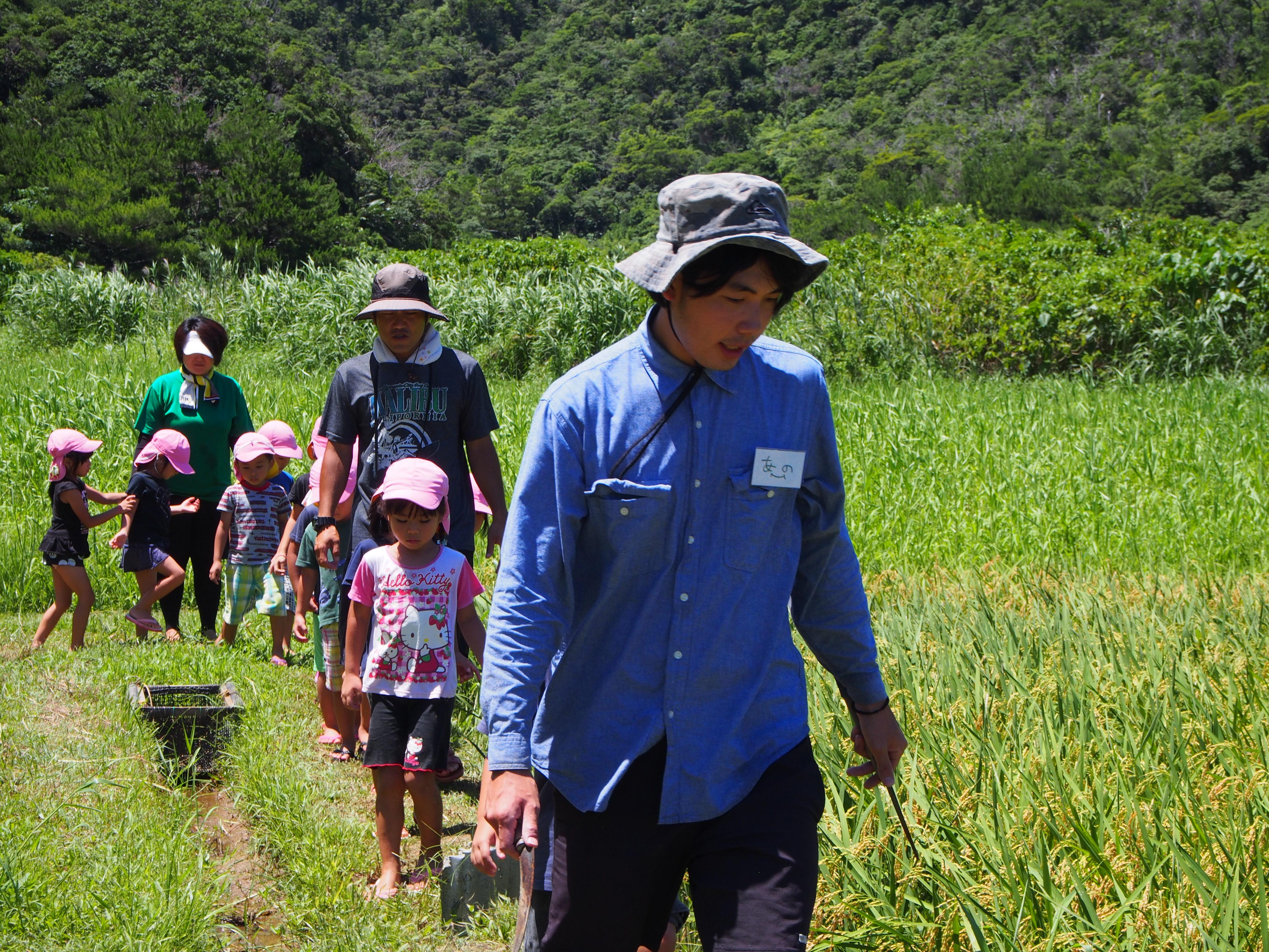沖縄県名護市嘉陽の稲作を復活させた若者たち