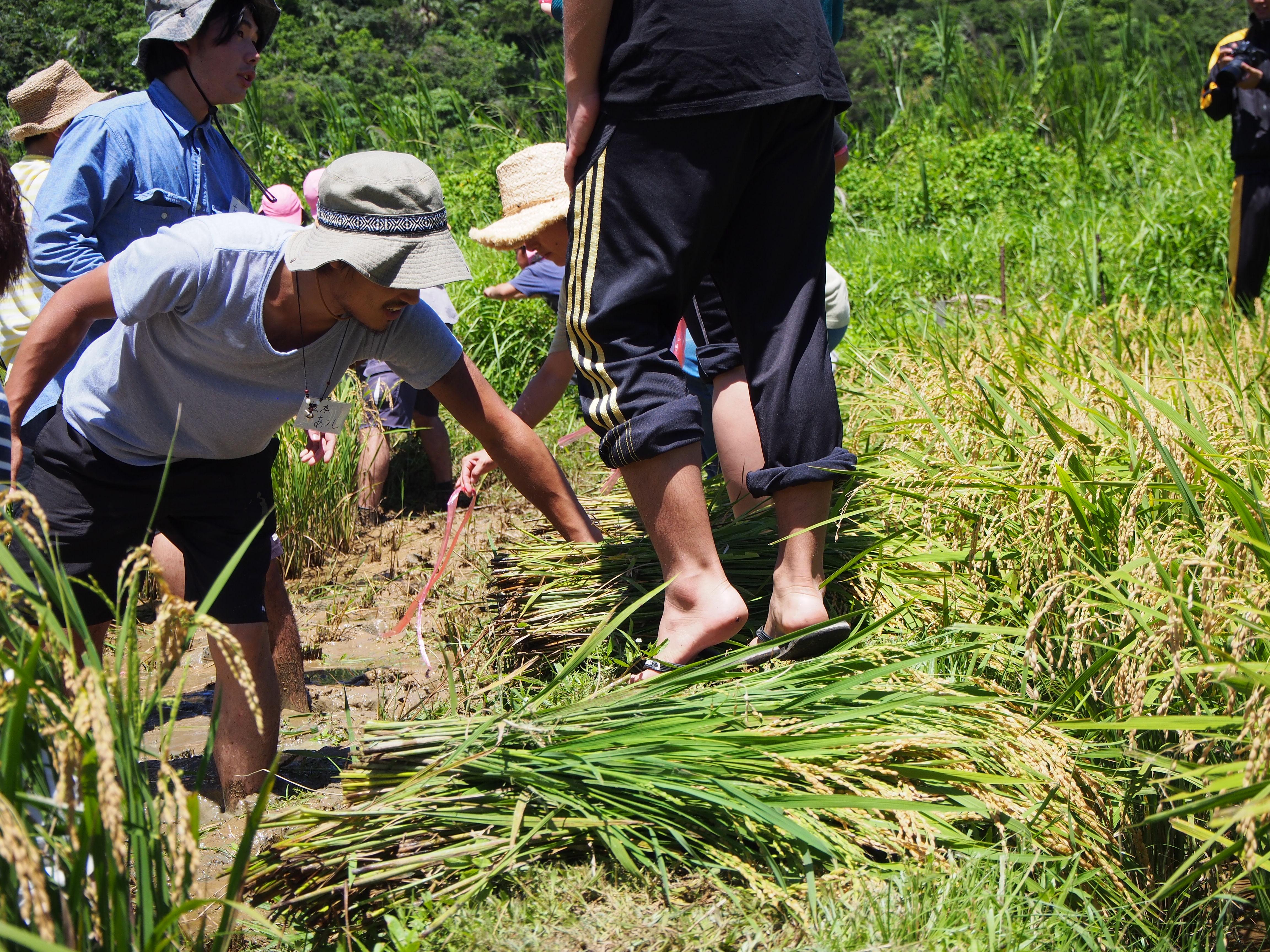 沖縄の若者の取り組む農業イベントが名護市嘉陽で行われています