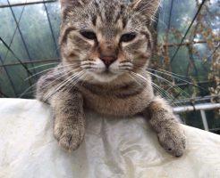 猫好きが増えるのはなぜか