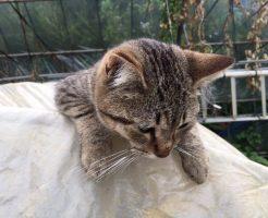 虎毛の猫の可愛さ