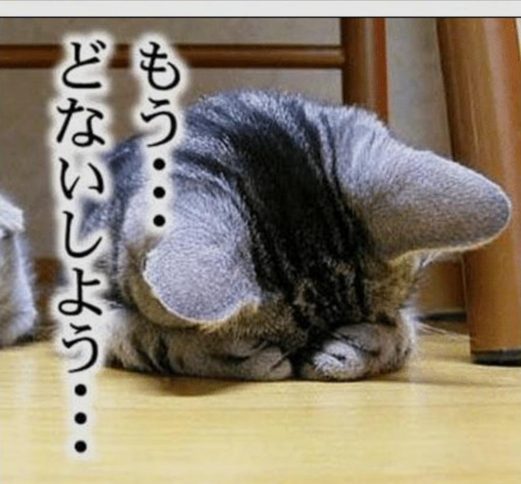 ネコの画像をデコるコツ!?