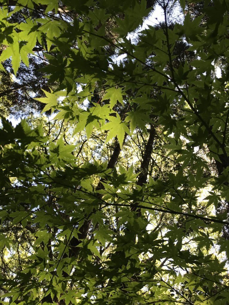 初夏の木漏れ日の輝き