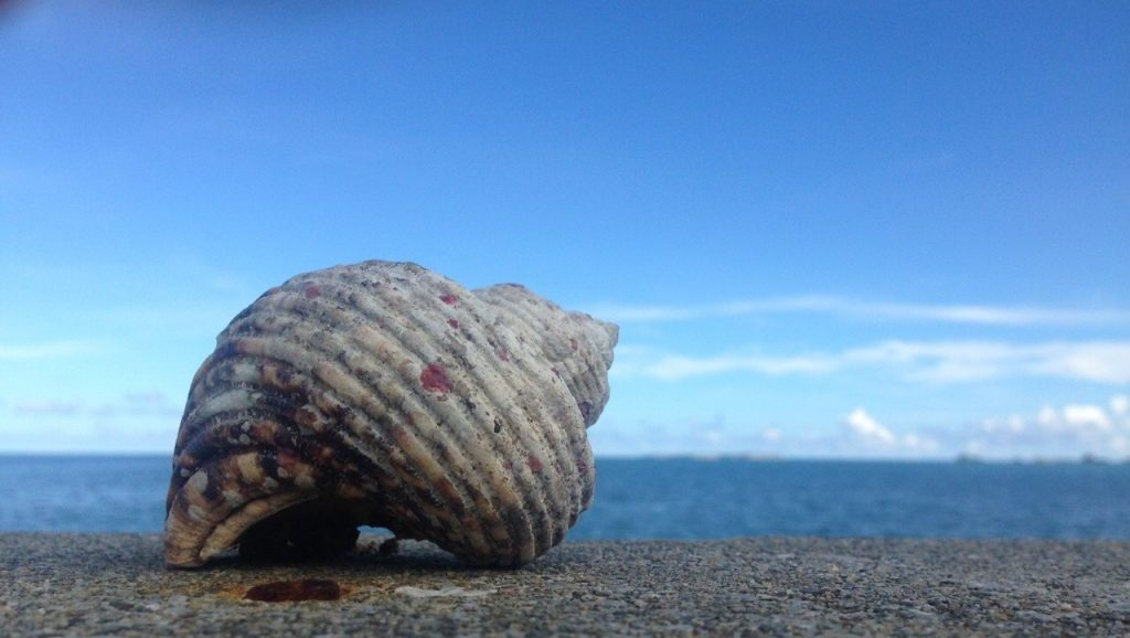 沖縄の海2
